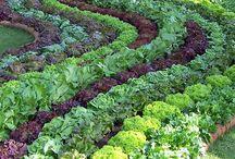 Zahrady,pěstování ,způsoby.....