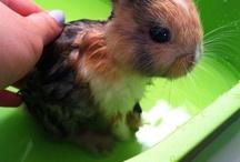 Cute animals / Adorable animals / by Cheyenne Kminek