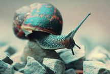 Animals  / by Zenobia Kabondo