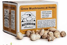 Top Quality Mushroom Growing Kits for Easy and Fun Mushroom growing / Here you will learn about various types of mushroom growing kits for growing different types of edible mushrooms. Growing mushrooms with kit is easy and fun at home and back yard.  #mushroomkits #mushroomkit #fungikits #growmushroomwithkit #bestmushroomkits #bestfungikits #mushroomspores