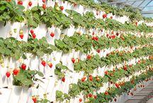 Horta Caseira e Jardim / Ideias de hora caseira para praticar a agricultura natural