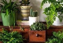 botanical plant inspiration