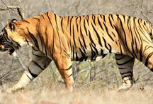 Wildlife News and Updates / Information about the wildlife news and updates of India.