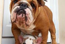 Animals 4 Life / puppies