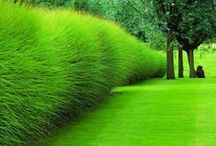 garden kingdom