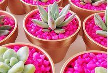 Plantas para minha horta e jardim