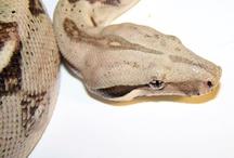 Snakes! / by Linda Humphrey