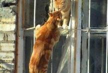 Gatti e... compagni