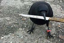 a murder of crows / (soc)