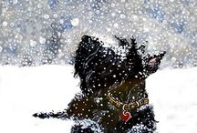 Twelve dogs of Christmas  / by Rebecca Johnson
