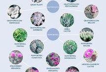 Identify succulents