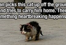 Heart Touching and Tear Jerkers