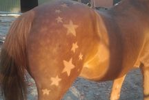 Paard scheren figuur
