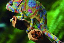 Färgstarka djur