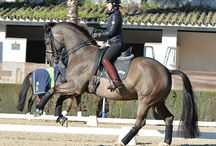 dressage / dressage riders and horses
