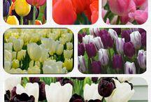 plants flowers etc