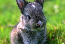 Baby-konijnen