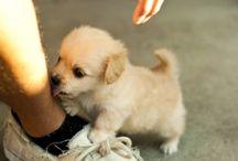 Puppies  / by Lizzie Sansing