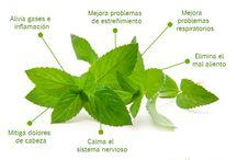 Nuestras amigas las plantas / Plantas que curan