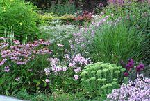Cottage garden / Border