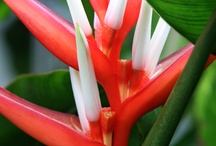 Botanicals / Tropical Hawaiian Flowers / by Hawkins Biggins Photography