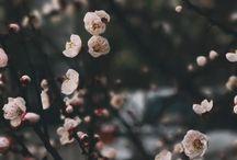 Instagram Вся Чижовка в цвету будет всю неделю