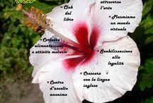Gruppo di lavoro Ibisco / il presente è un fiore, cogliamo insieme!!!