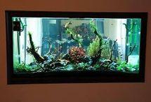 Akvárium ve zdi