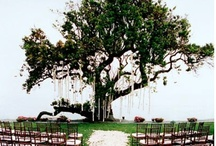 Angela & Taylor Wedding / Fall Wedding Ideas / by Pamela Kirby