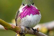 Hummingbirds / by Sunshine Stitches