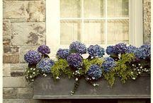 Window Boxes / by Karen Quinn