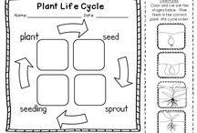 Bitkiler yaşam döngüsü