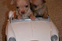 cuccioli teneri