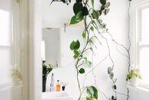 Detaljer: planter