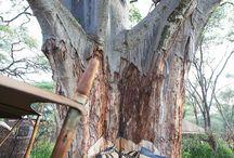 Stromy / krása a zaujímavosť stromov
