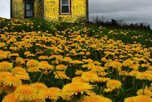 livin the yellow life
