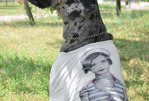 A special model for Paul Cortese / Hanna-Bi. Special model for Paul Cortese.  #paulcortese #fashion #dog #madeinitaly