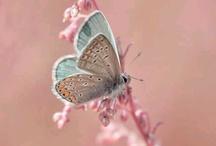 moodboard # 1 / naturaleza,mariposas
