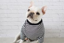 Best Dressed Pets! / Your pets like looking good too! Check out these styling pets!