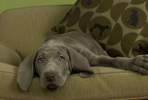 Pet Friendly Homes / Find great ideas to make your home pet friendly!