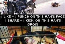 WE MUST STOP THE ANIMAL CRUELTY!