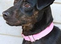 Adoptable Pets ~ available from the Franklin County Humane Society of North Carolina
