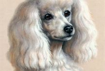 Poodles  - Daisy  2-1998 - 4-19 - 2014 - We will miss you / by Debby Decker