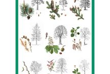 Stromy, kere