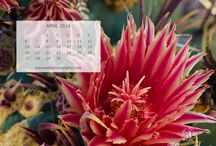 Calendars / Alaina Ann Photography's calendars with nature and travel photographs.
