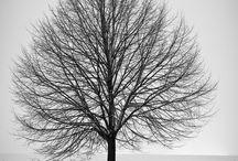 Fák, Erdők, Mezők és teremtményei