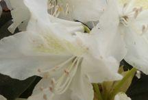 Spring Flowers❤ / moje fotky ( Jarní atd)