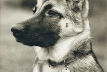 Animals I Love-DOGS / by Betty Rokyta