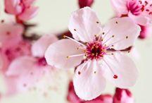 Garden Items...flowers, birds, etc / by Danielle S. Christopher