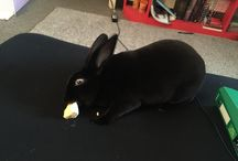 funny bunny/bunny